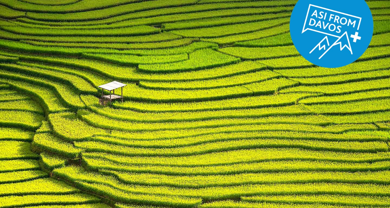 Green terraced fields