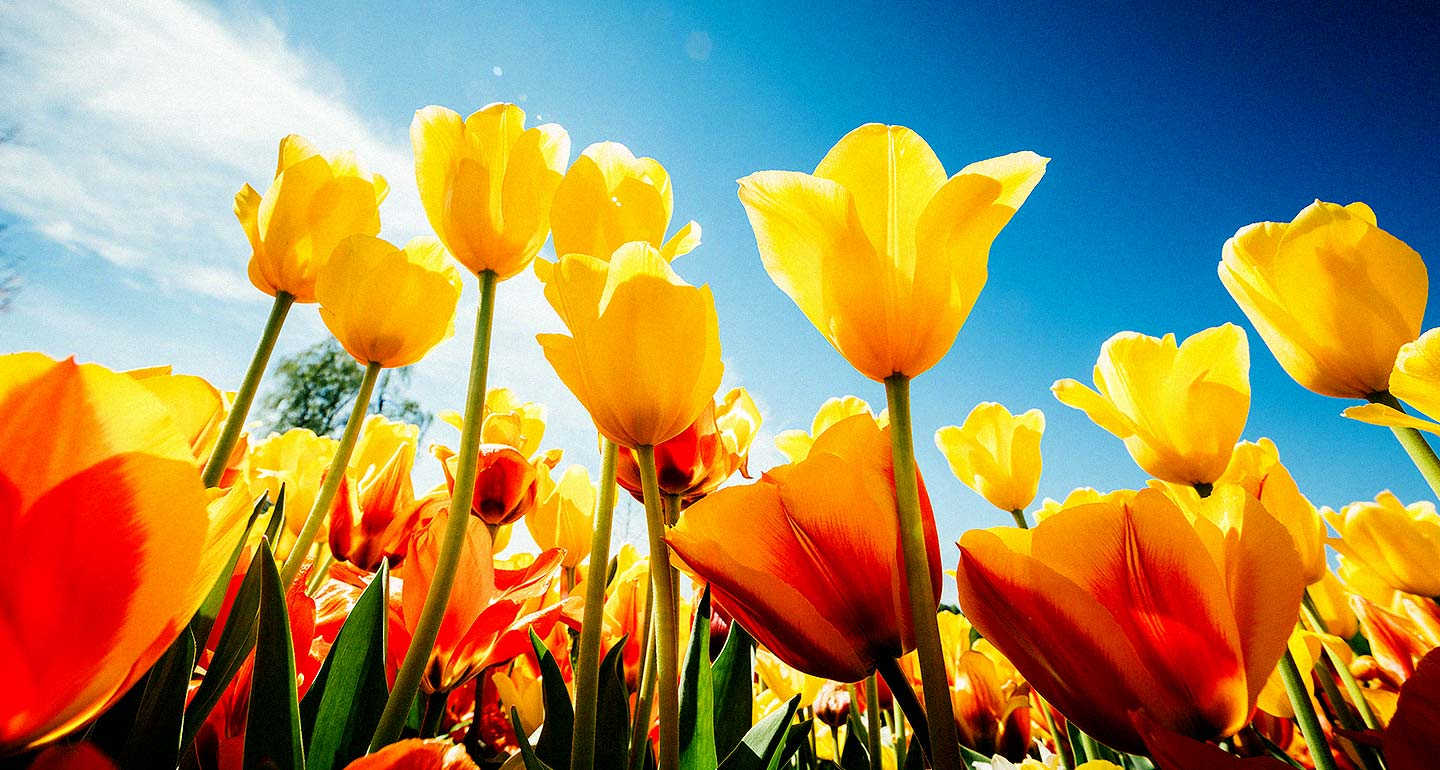 1440x770_asi_spring-is-coming