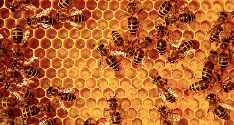 beekeeping-not-box-ticking